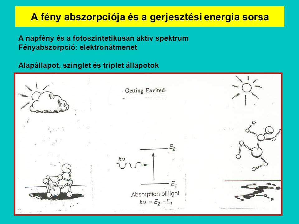 A fény abszorpciója és a gerjesztési energia sorsa A napfény és a fotoszintetikusan aktív spektrum Fényabszorpció: elektronátmenet Alapállapot, szingl