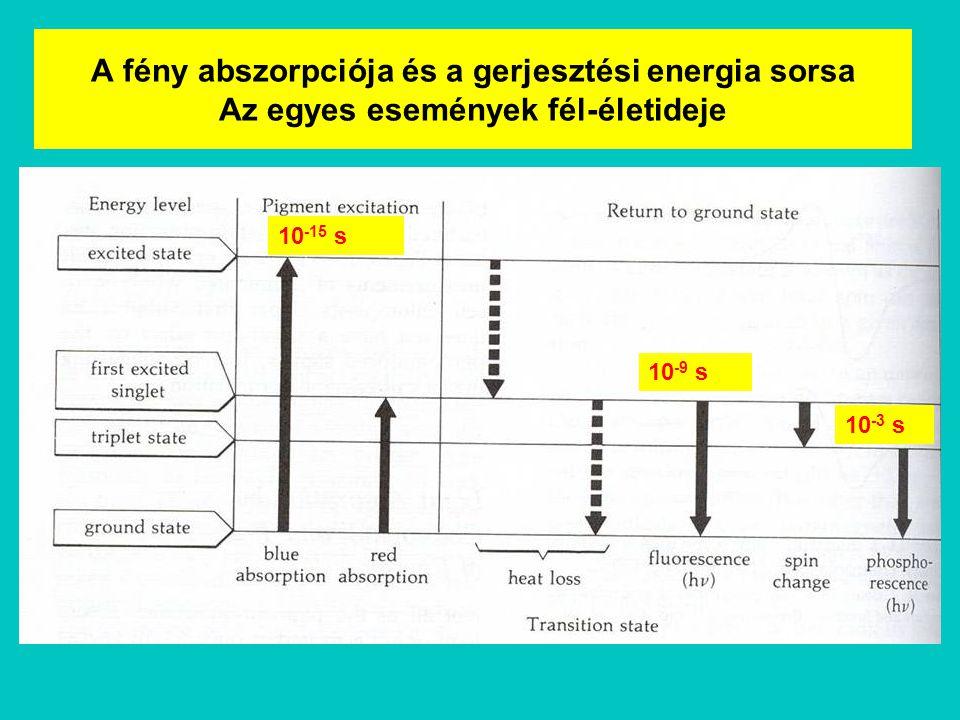 A fény abszorpciója és a gerjesztési energia sorsa Az egyes események fél-életideje 10 -15 s 10 -9 s 10 -3 s