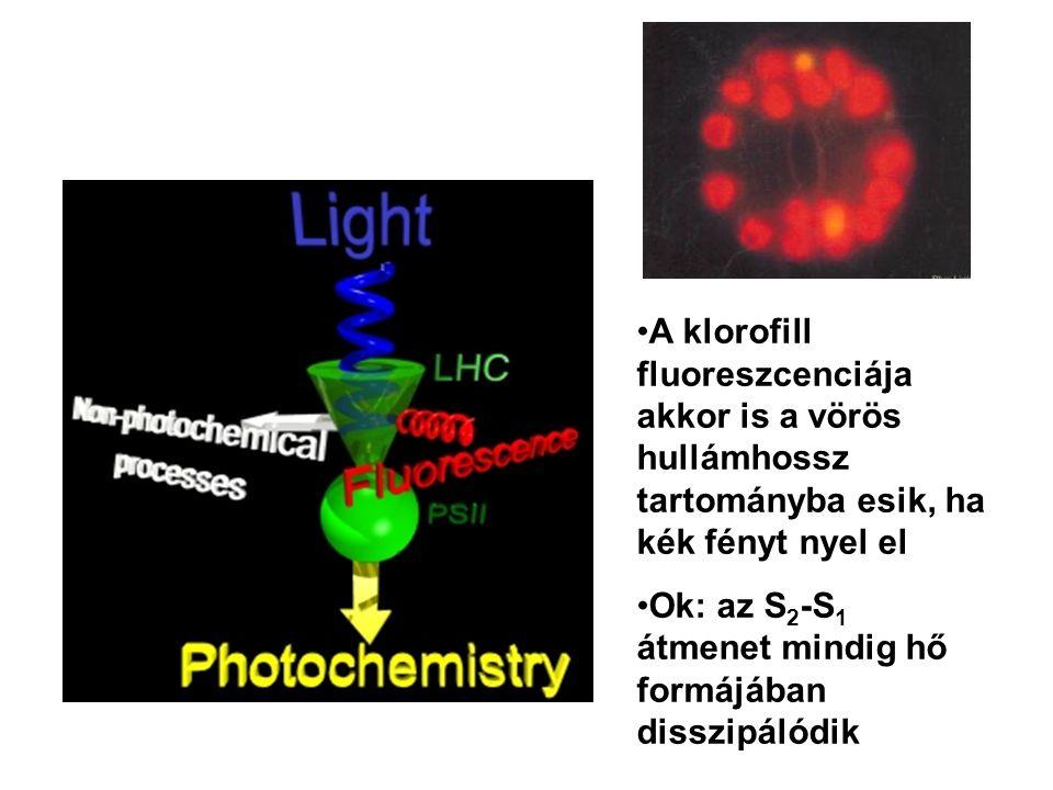 A klorofill fluoreszcenciája akkor is a vörös hullámhossz tartományba esik, ha kék fényt nyel el Ok: az S 2 -S 1 átmenet mindig hő formájában disszipá