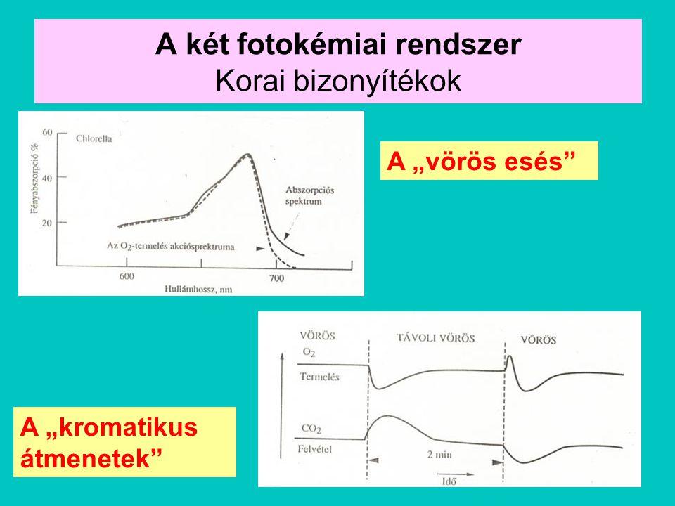 """A két fotokémiai rendszer Korai bizonyítékok A """"vörös esés"""" A """"kromatikus átmenetek"""""""