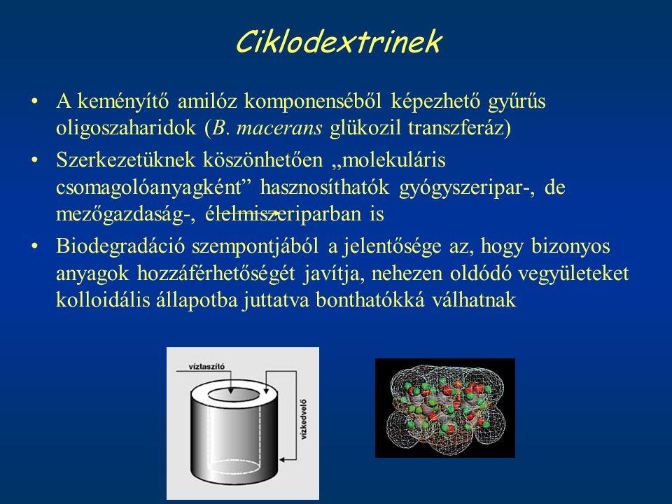 """Ciklodextrinek A keményítő amilóz komponenséből képezhető gyűrűs oligoszaharidok (B. macerans glükozil transzferáz) Szerkezetüknek köszönhetően """"molek"""