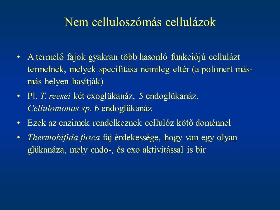 Nem celluloszómás cellulázok A termelő fajok gyakran több hasonló funkciójú cellulázt termelnek, melyek specifitása némileg eltér (a polimert más- más