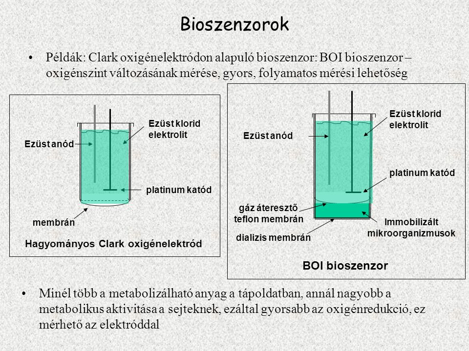 Bioszenzorok Példák: Clark oxigénelektródon alapuló bioszenzor: BOI bioszenzor – oxigénszint változásának mérése, gyors, folyamatos mérési lehetőség M