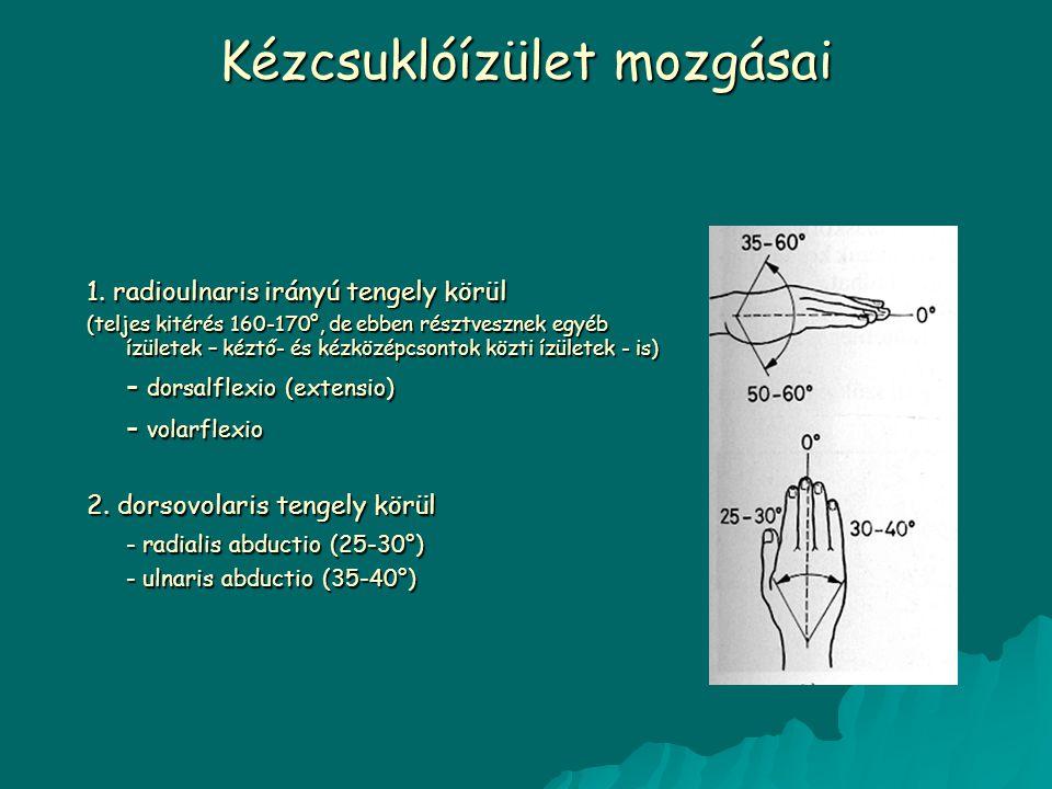Kézcsuklóízület mozgásai 1. radioulnaris irányú tengely körül (teljes kitérés 160-170°, de ebben résztvesznek egyéb ízületek – kéztő- és kézközépcsont