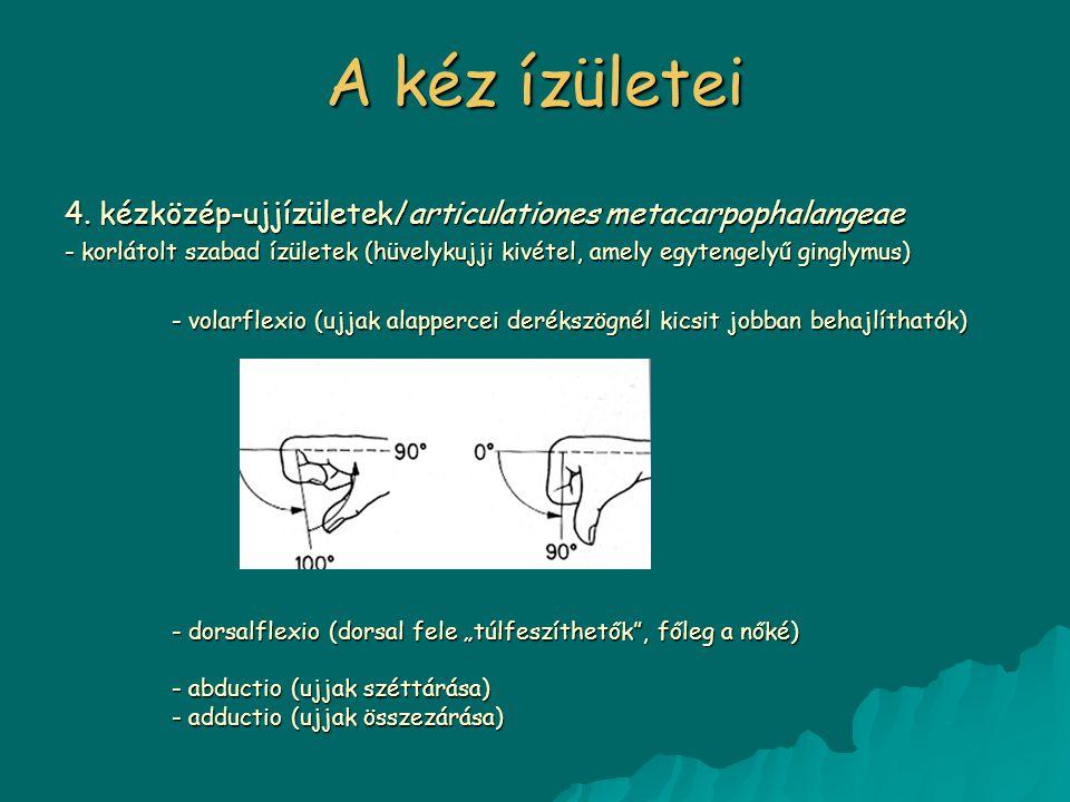 4. kézközép-ujjízületek/articulationes metacarpophalangeae - korlátolt szabad ízületek (hüvelykujji kivétel, amely egytengelyű ginglymus) - volarflexi