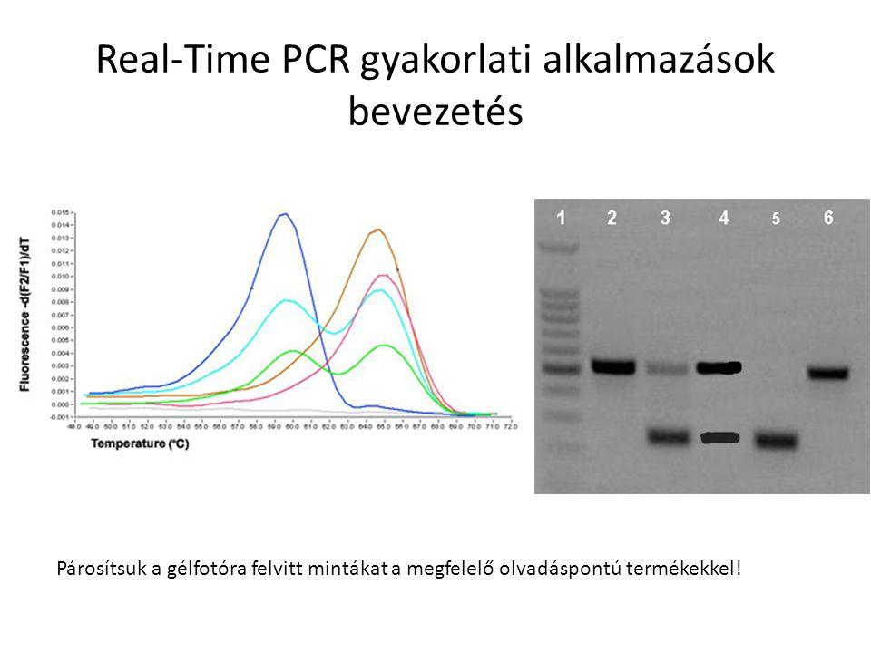 Real-Time PCR gyakorlati alkalmazások bevezetés Párosítsuk a gélfotóra felvitt mintákat a megfelelő olvadáspontú termékekkel!