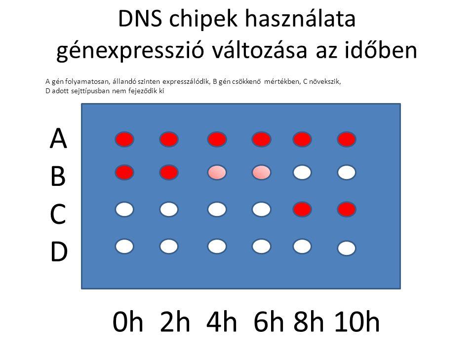 DNS chipek használata génexpresszió változása az időben v ABCDABCD 0h 2h 4h 6h 8h 10h A gén folyamatosan, állandó szinten expresszálódik, B gén csökkenő mértékben, C növekszik, D adott sejttípusban nem fejeződik ki