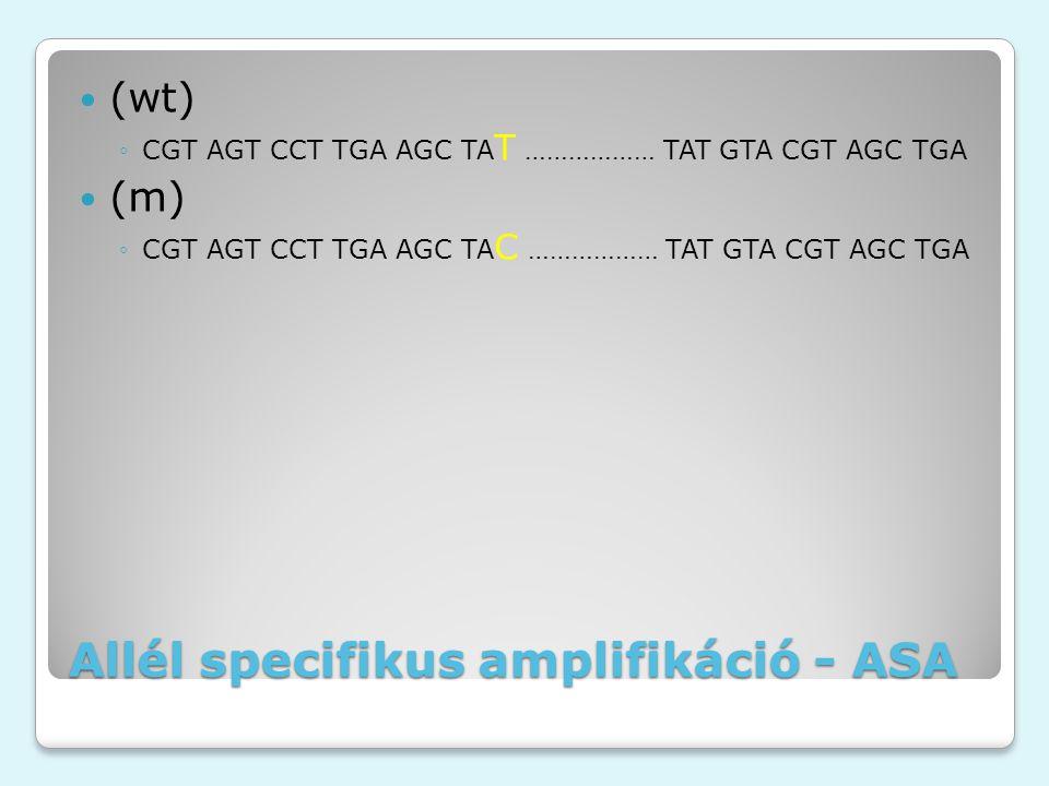 Allél specifikus amplifikáció - ASA (wt) ◦CGT AGT CCT TGA AGC TA T ……………… TAT GTA CGT AGC TGA (m) ◦CGT AGT CCT TGA AGC TA C ……………… TAT GTA CGT AGC TGA