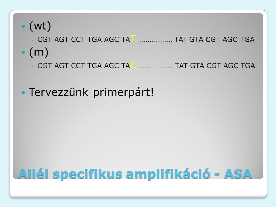 Allél specifikus amplifikáció - ASA (wt) ◦CGT AGT CCT TGA AGC TA T ……………… TAT GTA CGT AGC TGA (m) ◦CGT AGT CCT TGA AGC TA C ……………… TAT GTA CGT AGC TGA Tervezzünk primerpárt!