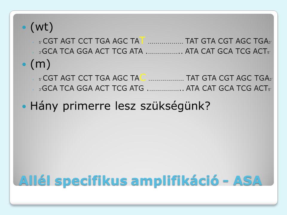 Allél specifikus amplifikáció - ASA (wt) ◦5' CGT AGT CCT TGA AGC TA T ……………… TAT GTA CGT AGC TGA 3' ◦3' GCA TCA GGA ACT TCG ATA.…………….. ATA CAT GCA TC