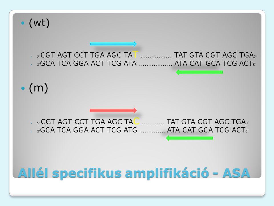Allél specifikus amplifikáció - ASA (wt) ◦5' CGT AGT CCT TGA AGC TA T ……………… TAT GTA CGT AGC TGA 3 ' ◦3' GCA TCA GGA ACT TCG ATA.……………..