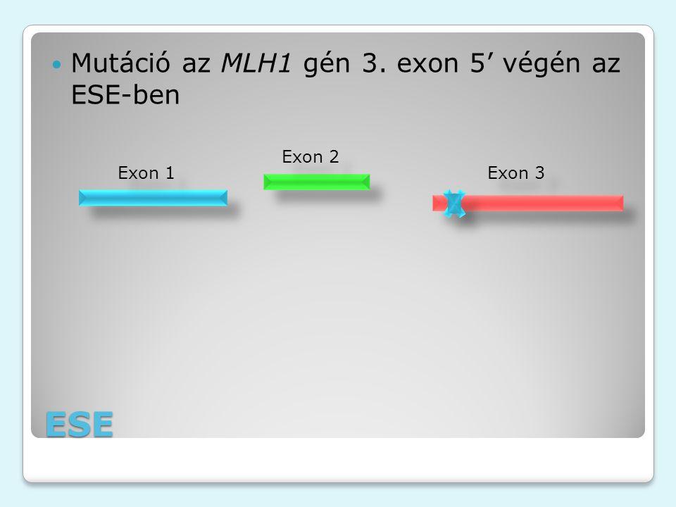 ESE Mutáció az MLH1 gén 3. exon 5' végén az ESE-ben Exon 1 Exon 2 Exon 3