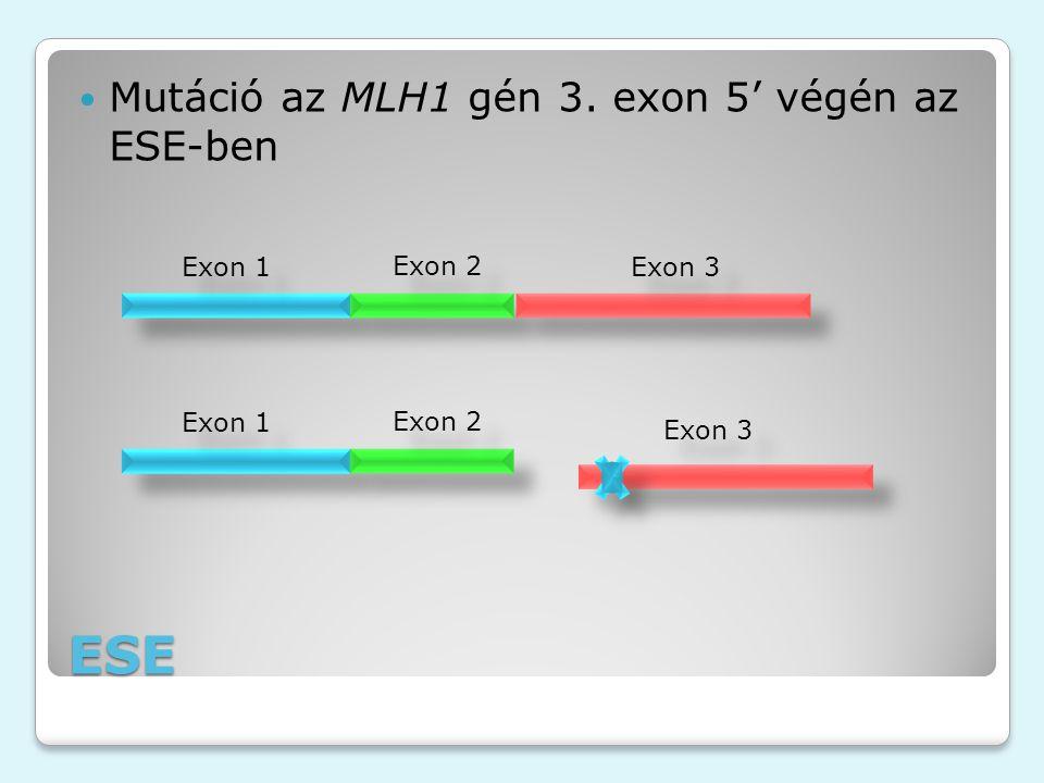 ESE Mutáció az MLH1 gén 3. exon 5' végén az ESE-ben Exon 1 Exon 2 Exon 3 Exon 1 Exon 2 Exon 3