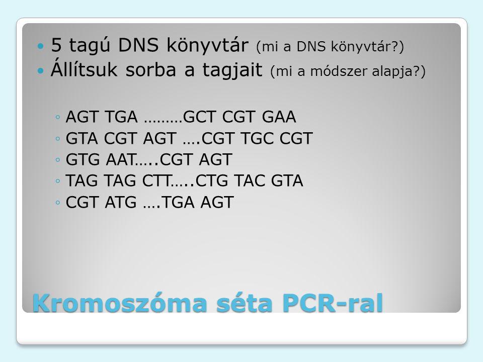 Kromoszóma séta PCR-ral 5 tagú DNS könyvtár (mi a DNS könyvtár ) Állítsuk sorba a tagjait (mi a módszer alapja ) ◦AGT TGA ………GCT CGT GAA ◦GTA CGT AGT ….CGT TGC CGT ◦GTG AAT…..CGT AGT ◦TAG TAG CTT…..CTG TAC GTA ◦CGT ATG ….TGA AGT