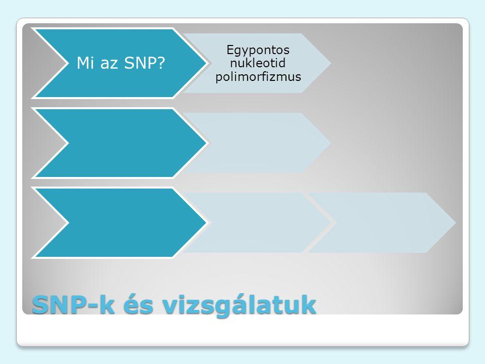 SNP-k és vizsgálatuk Mi az SNP? Egypontos nukleotid polimorfizmus