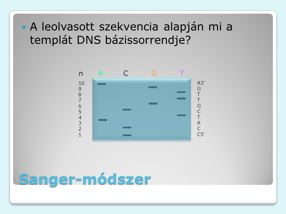Sanger-módszer A leolvasott szekvencia alapján mi a templát DNS bázissorrendje? n A C G T A3' G T T G C T A C C5' 10 9 8 7 6 5 4 3 2 1