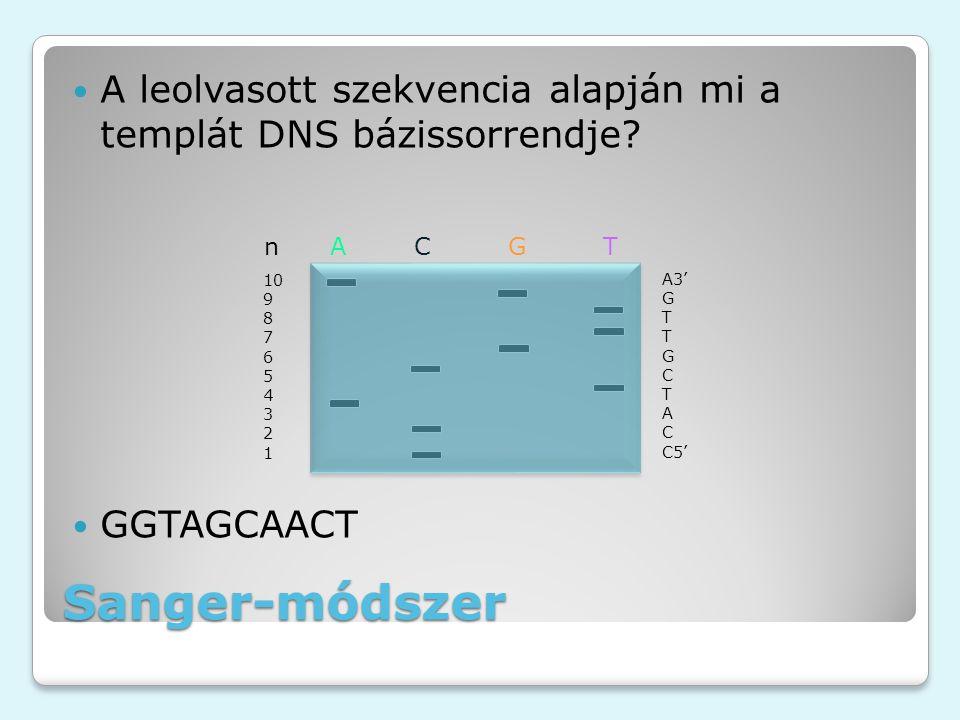A leolvasott szekvencia alapján mi a templát DNS bázissorrendje? GGTAGCAACT Sanger-módszer n A C G T A3' G T T G C T A C C5' 10 9 8 7 6 5 4 3 2 1