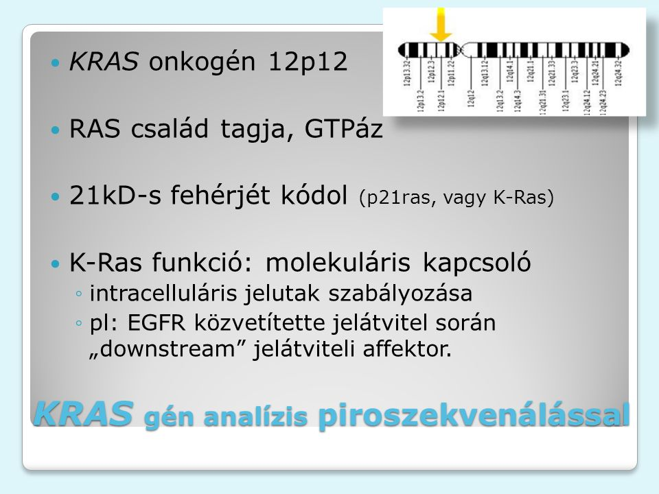 """KRAS gén analízis piroszekvenálással KRAS onkogén 12p12 RAS család tagja, GTPáz 21kD-s fehérjét kódol (p21ras, vagy K-Ras) K-Ras funkció: molekuláris kapcsoló ◦intracelluláris jelutak szabályozása ◦pl: EGFR közvetítette jelátvitel során """"downstream jelátviteli affektor."""