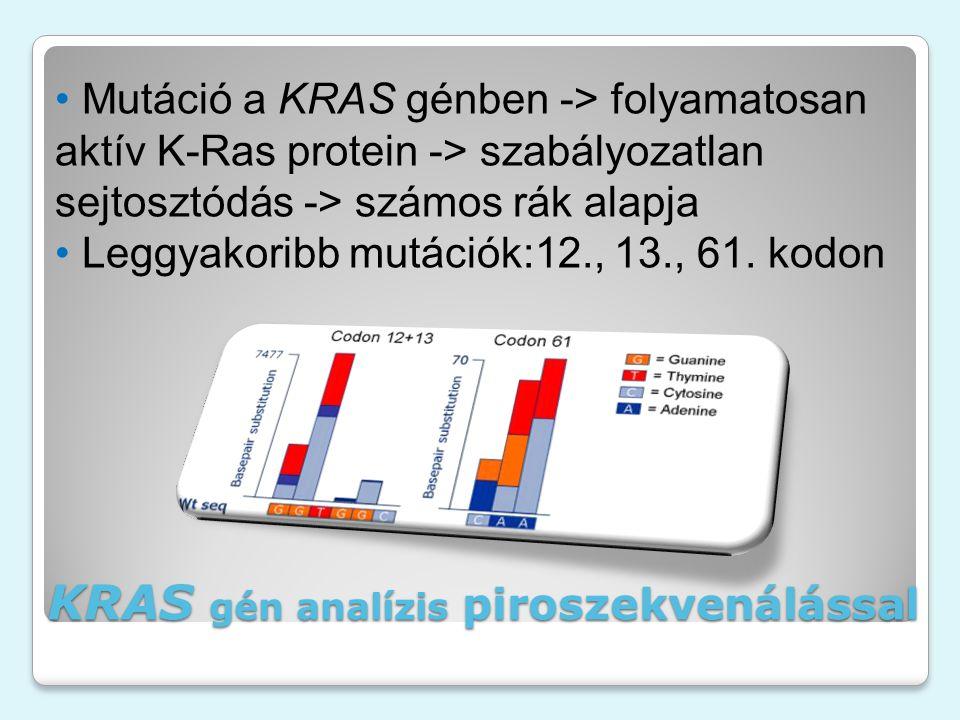 Mutáció a KRAS génben -> folyamatosan aktív K-Ras protein -> szabályozatlan sejtosztódás -> számos rák alapja Leggyakoribb mutációk:12., 13., 61.