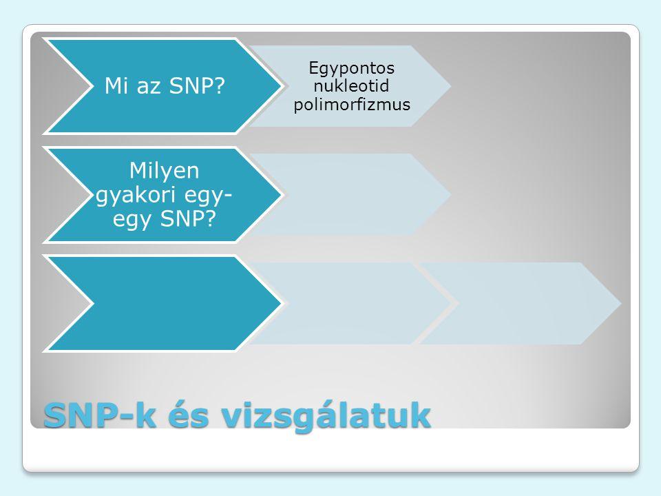 SNP-k és vizsgálatuk Mi az SNP? Egypontos nukleotid polimorfizmus Milyen gyakori egy- egy SNP?