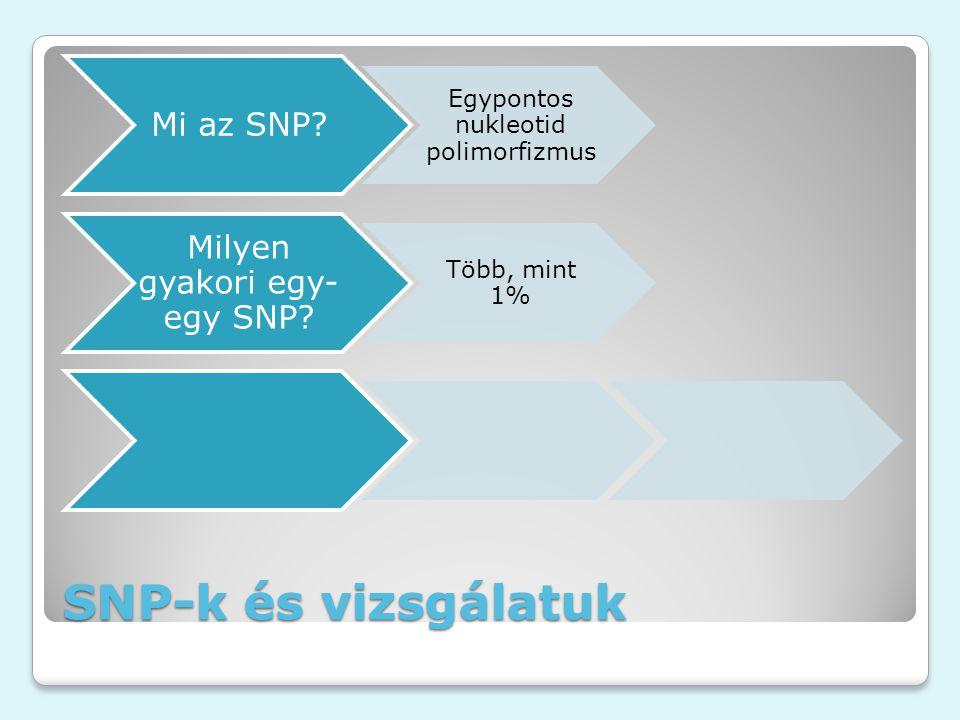 SNP-k és vizsgálatuk Mi az SNP? Egypontos nukleotid polimorfizmus Milyen gyakori egy- egy SNP? Több, mint 1%