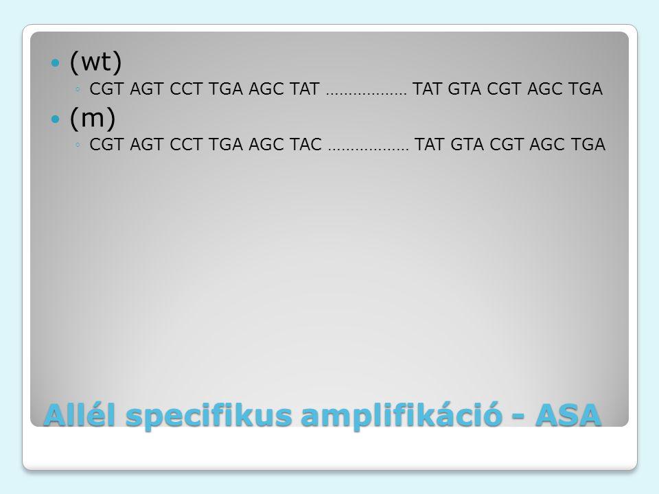 Allél specifikus amplifikáció - ASA (wt) ◦CGT AGT CCT TGA AGC TAT ……………… TAT GTA CGT AGC TGA (m) ◦CGT AGT CCT TGA AGC TAC ……………… TAT GTA CGT AGC TGA