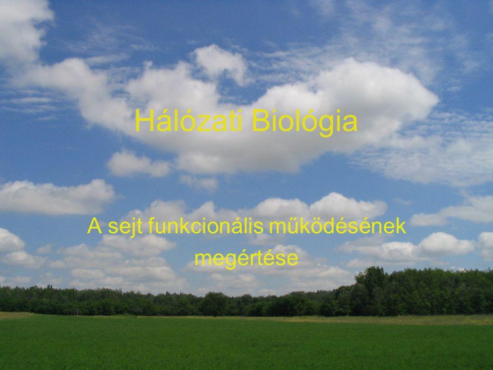 Hálózati Biológia A sejt funkcionális működésének megértése
