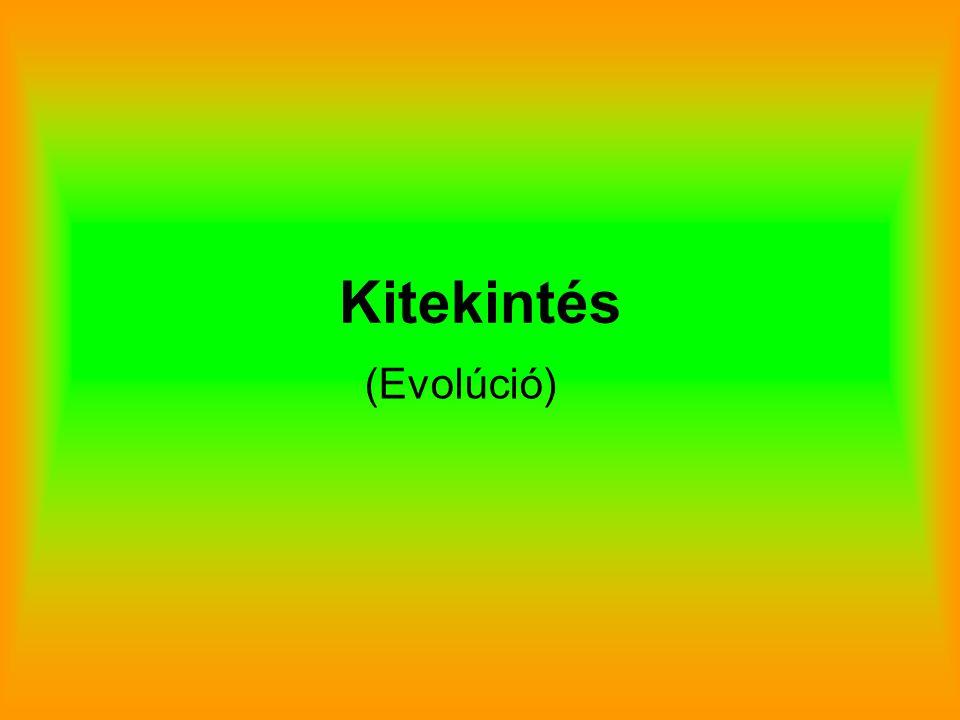 Kitekintés (Evolúció)