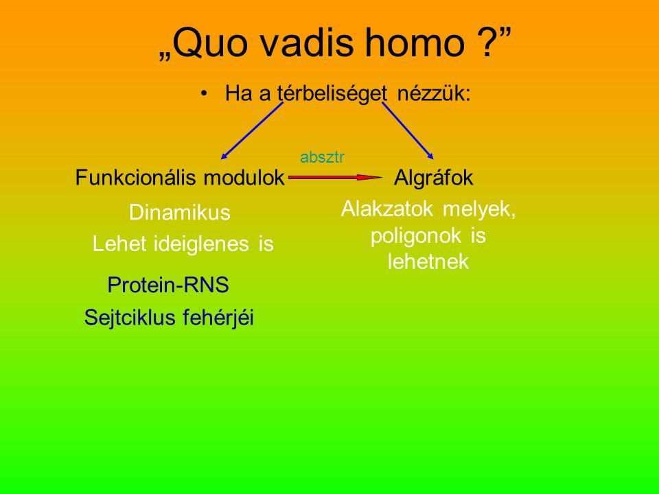 """""""Quo vadis homo ?"""" Ha a térbeliséget nézzük: Funkcionális modulokAlgráfok Dinamikus Lehet ideiglenes is Protein-RNS Sejtciklus fehérjéi Alakzatok mely"""