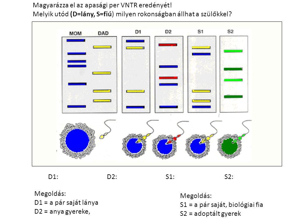 Megoldás: D1 = a pár saját lánya D2 = anya gyereke, Magyarázza el az apasági per VNTR eredényét.