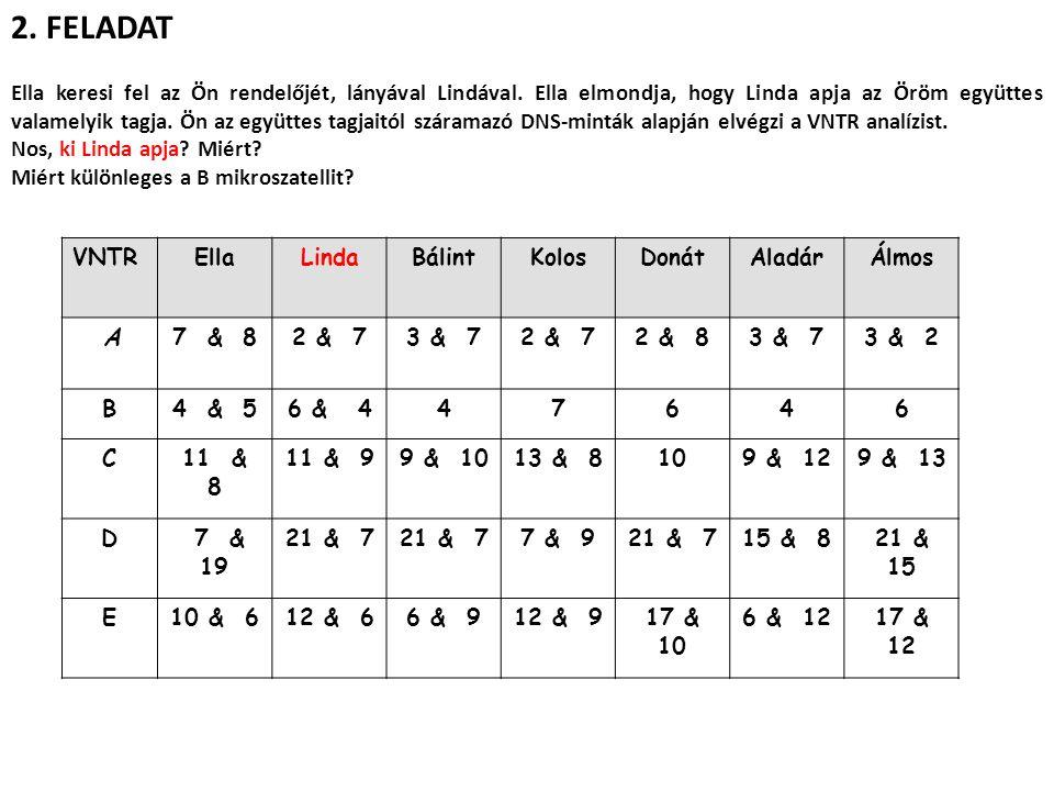 2. FELADAT VNTREllaLindaBálintKolosDonátAladárÁlmos A7 & 82 & 73 & 72 & 72 & 83 & 73 & 2 B4 & 56 & 447646 C11 & 8 11 & 99 & 1013 & 8109 & 129 & 13 D 7