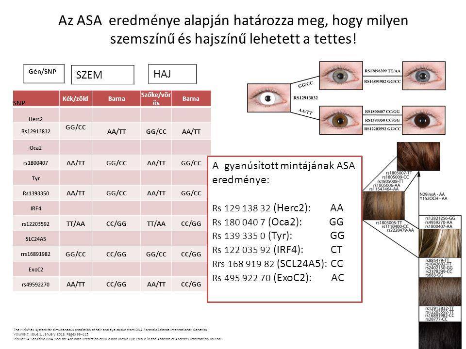 Az ASA eredménye alapján határozza meg, hogy milyen szemszínű és hajszínű lehetett a tettes! SNP Kék/zöldBarna Szőke/vör ös Barna Herc2 Rs12913832 GG/