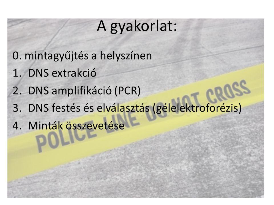 A gyakorlat: 0. mintagyűjtés a helyszínen 1.DNS extrakció 2.DNS amplifikáció (PCR) 3.DNS festés és elválasztás (gélelektroforézis) 4.Minták összevetés