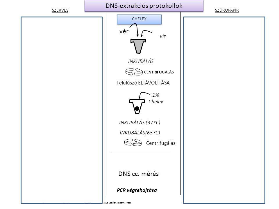 SZERVES SZŰRŐPAPÍR CHELEX lyukasztás Mosás extrakciós pufferben PCR Reagensek SDS, DTT, EDTA proteinase K INKUBÁLÁS (56 o C) Phenol, chloroform, isoamyl alcohol Vér beszárítása a speciális szűrőpapíron vér VORTEX DNS cc mérés nélkül PCR végrehajtása víz INKUBÁLÁS 1% Chelex INKUBÁLÁS(65 o C) INKUBÁLÁS (37 o C) DNS cc.