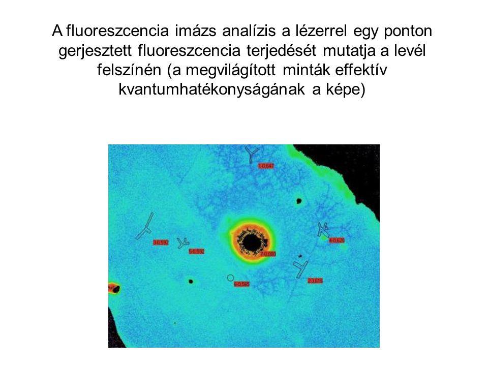 A fluoreszcencia imázs analízis a lézerrel egy ponton gerjesztett fluoreszcencia terjedését mutatja a levél felszínén (a megvilágított minták effektív
