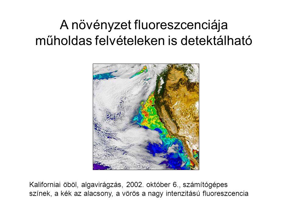 A növényzet fluoreszcenciája műholdas felvételeken is detektálható Kaliforniai öböl, algavirágzás, 2002. október 6., számítógépes színek, a kék az ala
