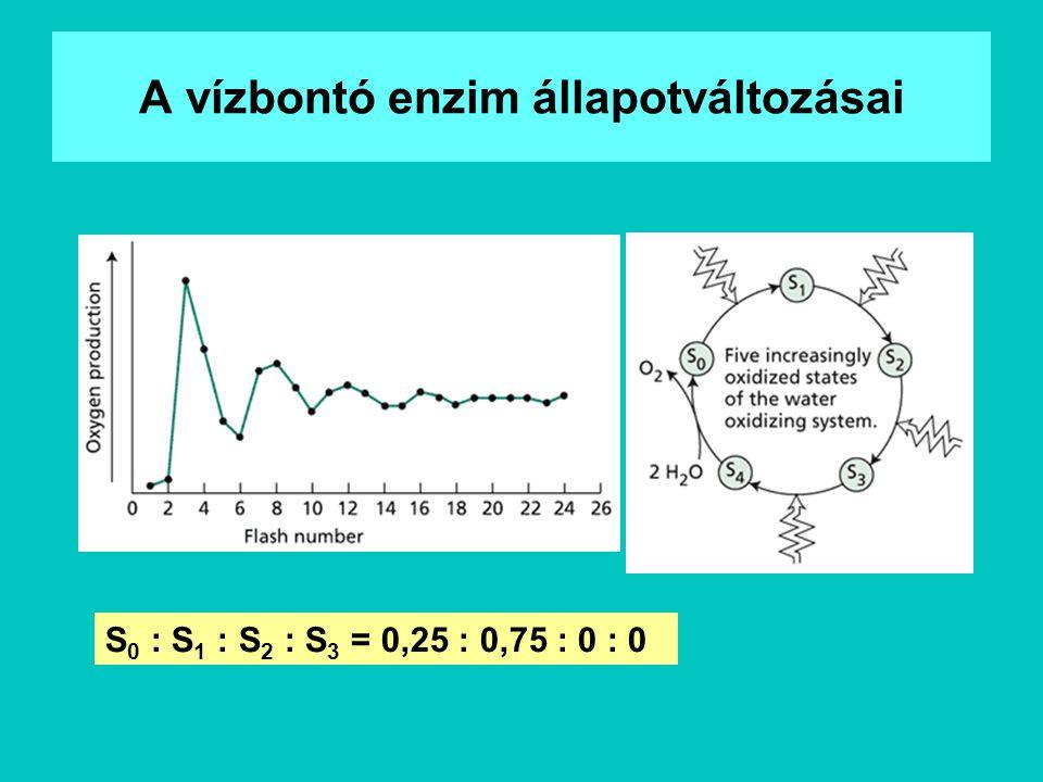 A vízbontó enzim állapotváltozásai S 0 : S 1 : S 2 : S 3 = 0,25 : 0,75 : 0 : 0