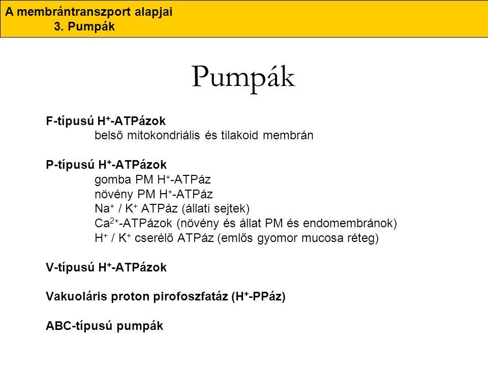 Pumpák F-típusú H + -ATPázok belső mitokondriális és tilakoid membrán P-típusú H + -ATPázok gomba PM H + -ATPáz növény PM H + -ATPáz Na + / K + ATPáz