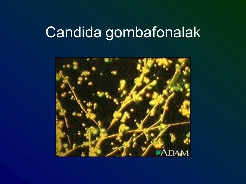 Candida gombafonalak