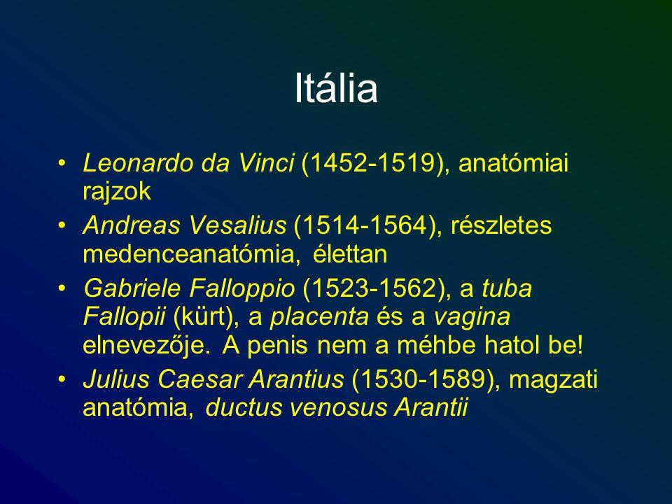 Itália Leonardo da Vinci (1452-1519), anatómiai rajzok Andreas Vesalius (1514-1564), részletes medenceanatómia, élettan Gabriele Falloppio (1523-1562)