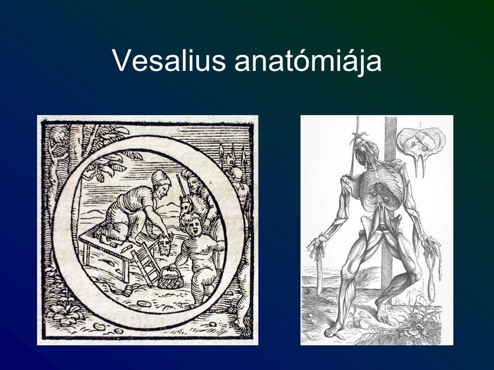 Vesalius anatómiája