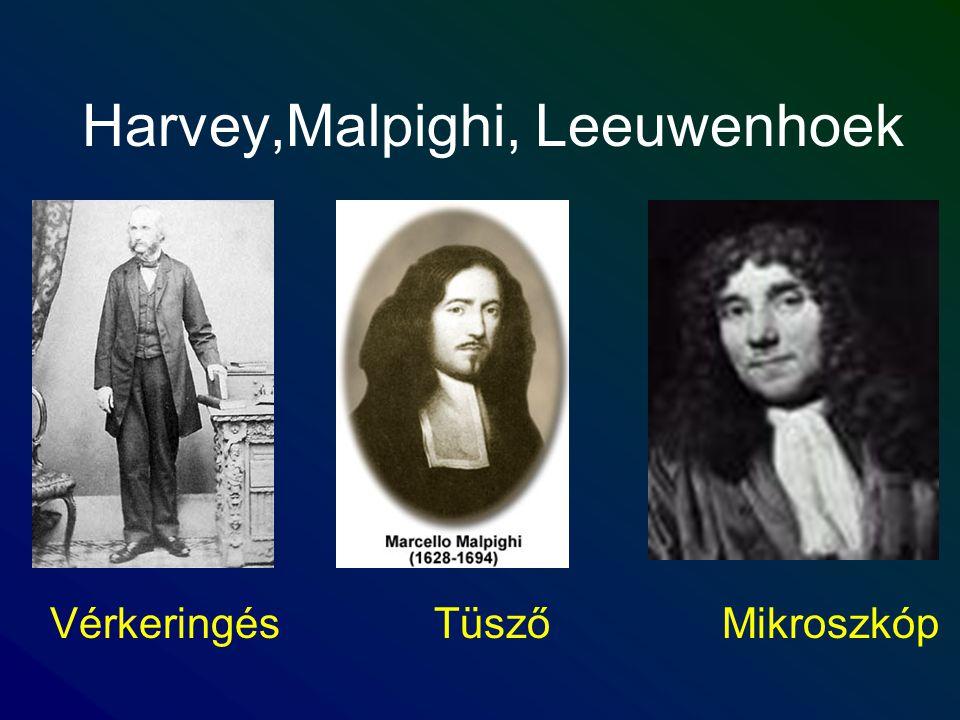 Harvey,Malpighi, Leeuwenhoek VérkeringésTüszőMikroszkóp