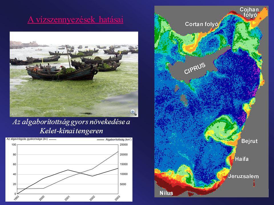 A vízszennyezések hatásai Az algaborítottság gyors növekedése a Kelet-kínai tengeren
