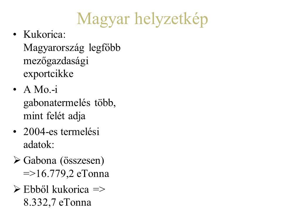 Magyar helyzetkép Kukorica: Magyarország legfőbb mezőgazdasági exportcikke A Mo.-i gabonatermelés több, mint felét adja 2004-es termelési adatok:  Ga