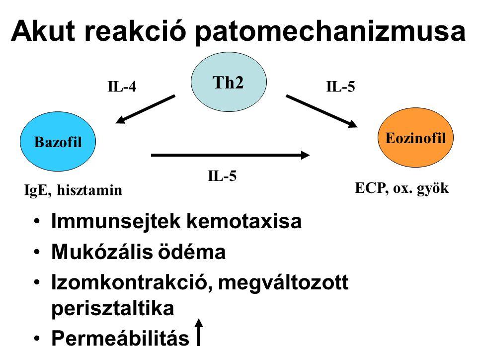 Akut reakció patomechanizmusa Immunsejtek kemotaxisa Mukózális ödéma Izomkontrakció, megváltozott perisztaltika Permeábilitás Th2 Eozinofil Bazofil IL