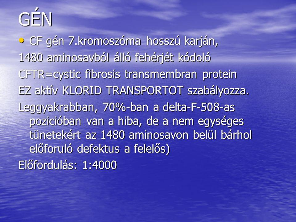 GÉN CF gén 7.kromoszóma hosszú karján, CF gén 7.kromoszóma hosszú karján, 1480 aminosavból álló fehérjét kódoló CFTR=cystic fibrosis transmembran protein EZ aktív KLORID TRANSPORTOT szabályozza.