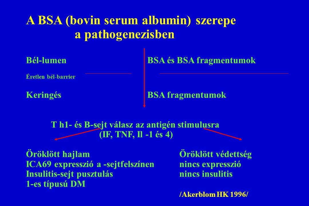A BSA (bovin serum albumin) szerepe a pathogenezisben Bél-lumen BSA és BSA fragmentumok Éretlen bél-barrier Keringés BSA fragmentumok T h1- és B-sejt