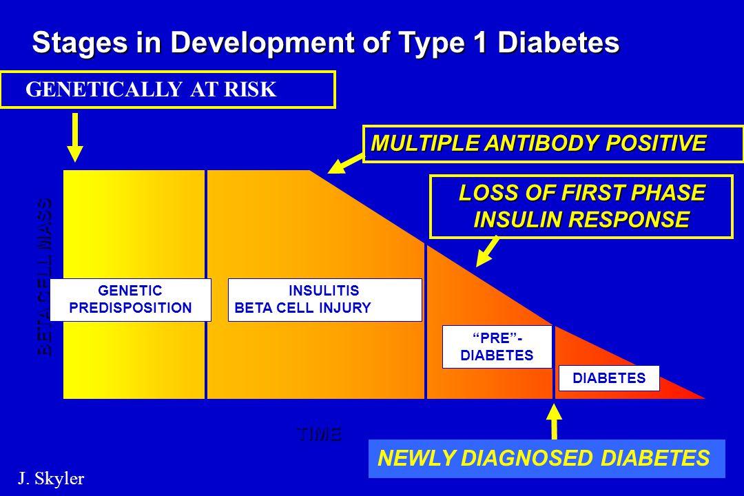 A BSA (bovin serum albumin) szerepe a pathogenezisben Bél-lumen BSA és BSA fragmentumok Éretlen bél-barrier Keringés BSA fragmentumok T h1- és B-sejt válasz az antigén stimulusra (IF, TNF, Il -1 és 4) Öröklött hajlam Öröklött védettség ICA69 expresszió a -sejtfelszínen nincs expresszió Insulitis-sejt pusztulás nincs insulitis 1-es típusú DM /Akerblom HK 1996/