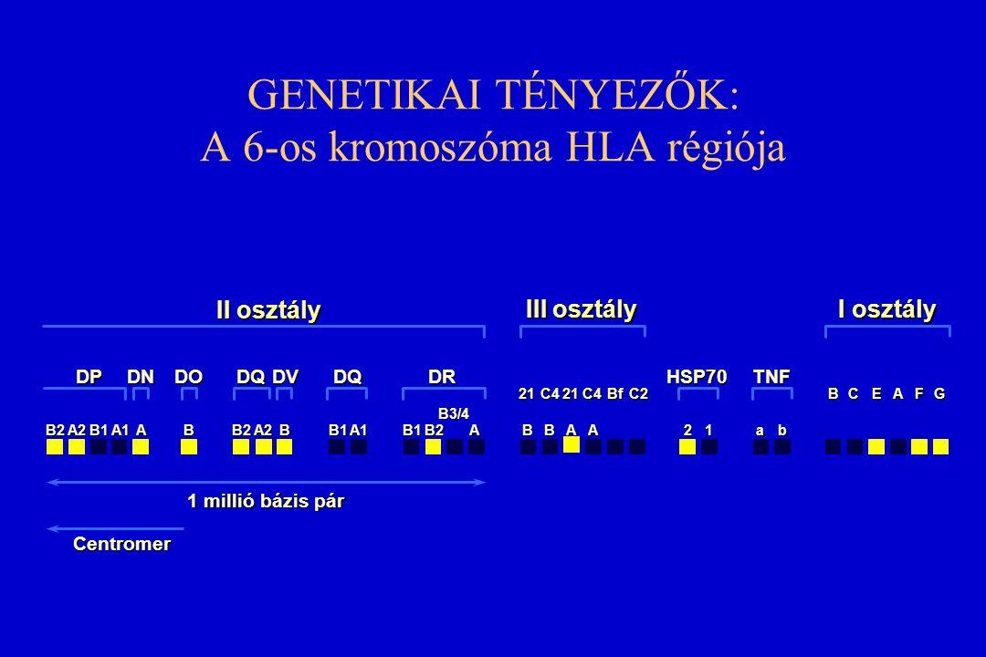 GENETIKAI TÉNYEZŐK: A 6-os kromoszóma HLA régiója II osztály III osztály I osztály B2A2B1A1ABB2A2BB1A1B1B2 B3/4 ABBAA21ab 21C421C4BfC2BCEAFG DPDNDODQD