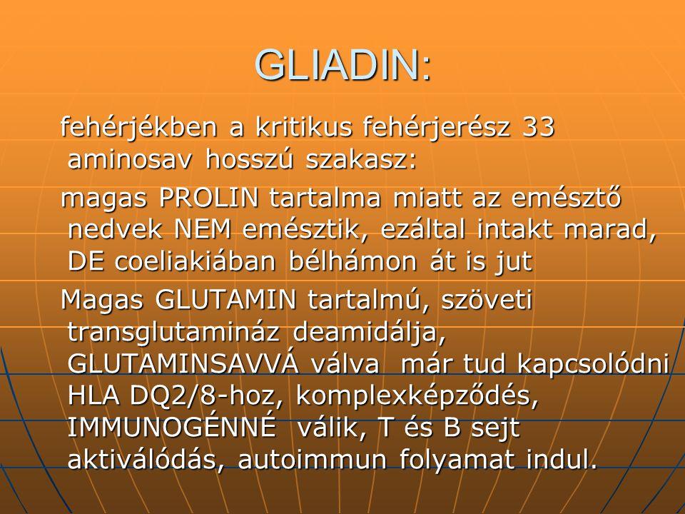 GLIADIN: fehérjékben a kritikus fehérjerész 33 aminosav hosszú szakasz: fehérjékben a kritikus fehérjerész 33 aminosav hosszú szakasz: magas PROLIN ta